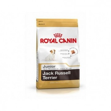 Bhn jack russel junior 1,5 kg