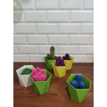 Cactus de colores variados con maceta colgante