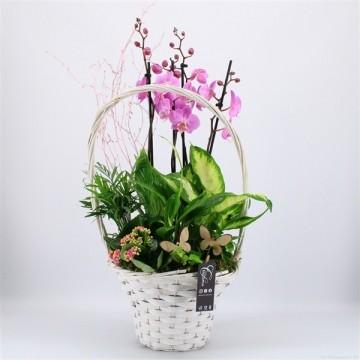 Cesta plantas con orquideas alto 80 cm
